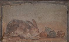 Fresco showing a rabbit sniffing greedily at four huge figs, from Pompeii, Naples National Archaeological Museum Ancient Rome, Ancient History, Art History, Zoo 2, Naples Museum, Art Romain, Pompeii And Herculaneum, Art Antique, Roman Art