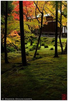 """Saiho-ji is a Rinzai Zen Buddhist temple located in Matsuo, Nishikyo Ward, Kyoto, Japan. The temple, which is famed for its moss garden, is commonly referred to as """"Koke-dera"""" , meaning """"moss temple"""", while the formal name is """"Koinzan Saiho-ji"""". Ironicall"""