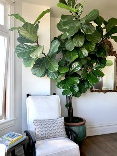 HOUSE PLANTS...What Survives and Why You Need Them Now - Classic Casual Home