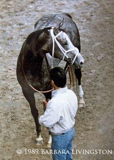 Winning Colors at Aqueduct, 1989.