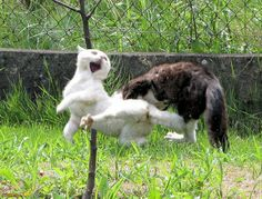 Cat Fight - 29 Pictures