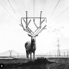 Humans imitate nature #contemporaryart #art #artist #nature #termeszet #muveszet #hatartalan #elme