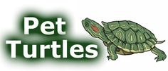 Looking for a community to hangout or just learn about all the different topics of pet turtles.