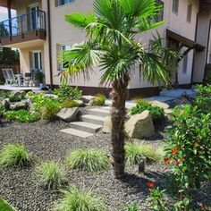 Land Scape, Palm, Modern, Plants, Instagram, Home, Design, Trendy Tree, Ad Home