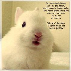 Oh Bunny! You're so funny!