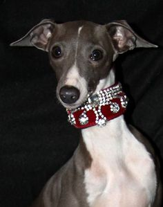 I think I could make this, a martingale with rhinestones for special occasions. How very royal! #italiangreyhound