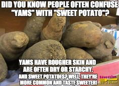 An interesting fact inspired by the Alphabet Plate! Yams, Sweet Potato, Fun Facts, Alphabet, Potatoes, Plate, Education, Inspired, Vegetables