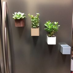 Magnetic planters perfect for small plants on the fridge or metallic boards.  OPTIONS: Varnished-Wood infill , Plain- wood infill, white, gray... or