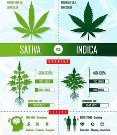 Informational pin about the differences between indica and sativa Planta Cannabis, Cannabis Edibles, Weed Facts, Marijuana Facts, Growing Weed, Cannabis Growing, Medical Cannabis, Just In Case, Medical Marijuana