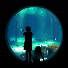 Aquarium of the Americas, New Orleans #NOLA #Aquarium #NewOrleans