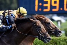 Wise Dan beats Optimizer by a nose in the 2014 Bernard Baruch at Saratoga, his 1st race after colic surgery.