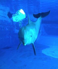 delfin, delphin, dolphin, delfino, dauphin