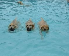 …it would look like this. | These Dogs Paddling At A Doggy Daycare Pool Party Are Ridiculously Cute