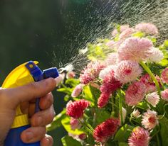 Deter garden bugs and beat fungus with these natural mixes.