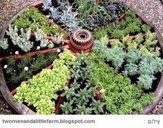 אדנית צמחי תבלין