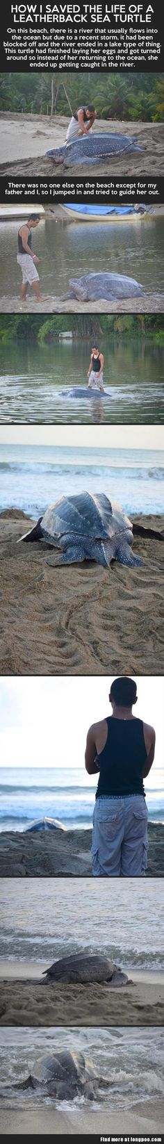 How I saved the life of a leatherback sea turtle…