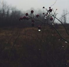Simple and beautiful Cosy Interior, November Rain, Months In A Year, 12 Months, Far Away, The Outsiders, Tumblr, Simple, Winter