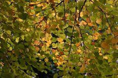Ahhhh, fall. www.fiskars.com