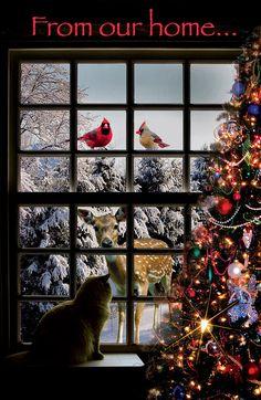 My Christmas Card Digital Art