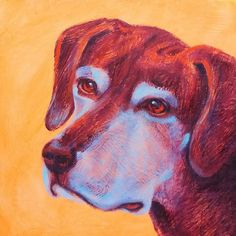 Pet portrait - Sobe - x acrylic. Her owner loves it! Let me paint one for you! Animal Paintings, Pet Portraits, Lisa, Colorful, Contemporary, Photo And Video, Pets, Creative, Artist
