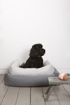 Harry the Dog in Powder Grey Bolster Bed from Mungo & Maud, Dog & Cat Outfitters