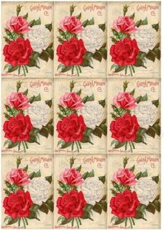 Shabby chic Vintage seed catalog roses   digital collage sheets for scrapbook and cards  DC79 by shabbybeautiful, $2.49 USD