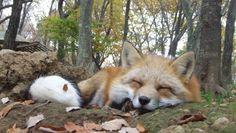 Partez à la découverte de l'un des emblèmes du Japon, peu connu : le renard, ou « kitsune ».