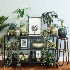 Create an urban jungle interior with different plants - - Room With Plants, House Plants Decor, Jardim Natural, Jungle Vibes, Decoration Plante, Different Plants, Plant Wall, My New Room, Home Decor Inspiration