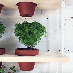 HOME DZINE Garden Ideas | Hanging herb garden