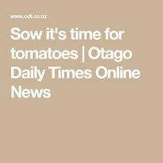 Sow it's time for tomatoes | Otago Daily Times Online News