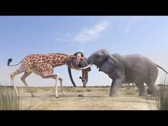 Water is the world's most precious resource. Nothing is more important than water. Giraffe, Elephant, Love Wallpapers Romantic, Water Fight, 5 Balloons, Cute Baby Animals, 1st Birthday Parties, Cute Babies, Camel
