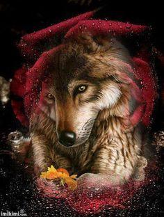mystic rose wolf
