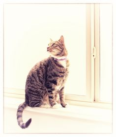 Cat on a Sill by Cheryl Bezuidenhout on Cheryl, World, Cats, Heart, Artist, Photos, Animals, Gatos, Pictures