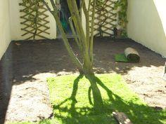 Création de gazon en jardin - Bègles (2)