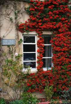 The Old Dolphin. Cirencester, Gloucestershire