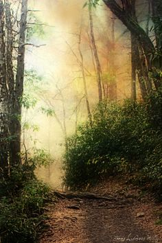 ~Path in the Woods~ which path are you on?