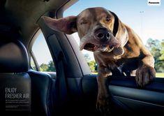 Panasonic Nanoe Automotive Air Conditioning: Confused dog | #ads #adv #marketing #creative #publicité #print #poster #advertising #campaign repinned by www.BlickeDeeler.de | Visit our inspirational website www.Printwerbung-Hamburg.de