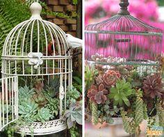 Até as gaiolas vazias podem ser aproveitadas para cultivar suculentas! Dê um toque de charme pendurando-as no seu jardim <3