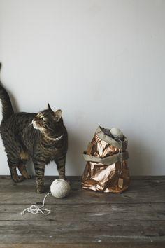 Cats yarn