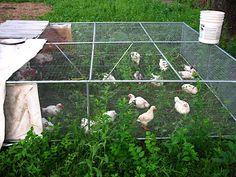 A guest post this week by Karl O'Melay. A chicken tractor is basically an open-bottomed movable pen that houses chickens. We use our chicken tractors to raise meat birds (Cornish-X broilers). Chicken Coop On Wheels, Cheap Chicken Coops, Portable Chicken Coop, Chicken Tractors, Building A Chicken Coop, Raising Backyard Chickens, Meat Chickens, Backyard Farming, Chicken Pen