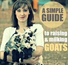 Weed 'em and Reap: A Simple Guide to Raising & Milking Goats / http://www.weedemandreap.com/2013/01/a-simple-guide-to-raising-milking-goats.html