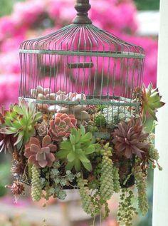 bird cage  hanging planter