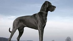 Looking for the list of tough, strong Female dog names and meanings? A list of great, unique female names for dogs inspired by Muscular, Powerful, Active, Tenacious and Energetic. You bring home a dog of...