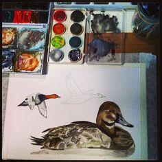 #акварель #аcuarela #watercolor #aythya ferina #nonfinita in #progress #fotobirding #birdfreaks - @pacotorresill- #webstagram