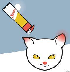 Es ist tatsächlich so, dass auch Katzen Sonnenbrand bekommen können. Vor allem weisse oder frisch geschorene Tiere, aber auch solche mit hellen Ohren und Nasen.