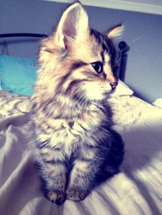 i only like kittens not cats Cute Kittens, Puppies And Kitties, Cats And Kittens, Photo Chat, Pretty Cats, Pretty Kitty, Cute Little Animals, Cute Creatures, Baby Cats