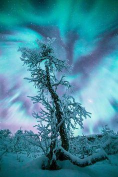 Aurora borealis #nature