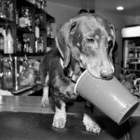 Party Wiener #dachshund