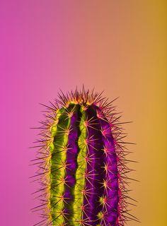 neon plants cactus cacti yellow pink minimal