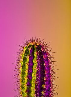 Iphone Wallpapers Cactus Iphone Wallpaper Views In 2019 Iphone
